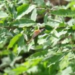 Moth at WFA